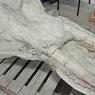 Французский фермер два года прятал в своём доме череп легендарного мастодонта