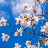 Метеоролог предупредил о ранней весне
