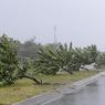На юге Японии более тридцати человек пострадали из-за тайфуна