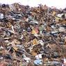Ещё один город Подмосковья вышел на акцию против мусорного полигона