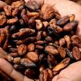 Ученые рассказали о ранее неизвестной пользе какао