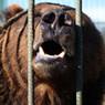 Муж искалеченной томички, которой медведь откусил руку, подал на развод