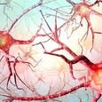 Ученые выявили «невозможный» способ работы человеческого мозга