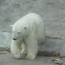 Московский зоопарк предлагает входные билеты вдвое дешевле, но с условием