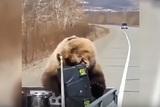На Камчатке медведь украл у охотников холодильник