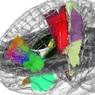 Создан первый голографический атлас мозга