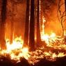 Красноярский губернатор назвал тушение лесных пожаров бессмысленным занятием