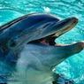 Неизвестно почему у берегов Перу погибло полтысячи дельфинов