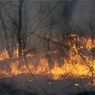 Экологи не разделяют оптимизма главы МЧС о скорой ликвидации пожаров в Сибири