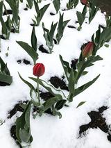 Москвичам пообещали весеннюю погоду