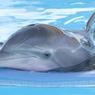 Дельфины и киты испытывают по отношению друг к другу эмоции близкие к человеческим