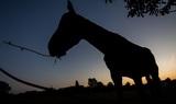 Съемки казахско-татарстанского фильма «Кэкбозат» завершатся в следующем году