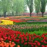 Праздничный Пекин утопает в  океане  живых цветов