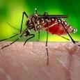 Группа ученых из КНР и Франции создала вакцину против лихорадки Зика