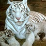 Армани стал защитником животных