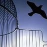 Первые амнистированные могут выйти на свободу к 9 мая