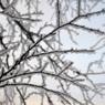 Росгидромет дал прогноз на грядущую зиму: почти везде будет минус