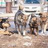 В Магадане свора собак растерзала женщину
