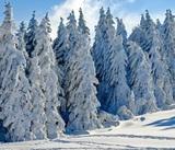 Дети, которых мать оставила в лесу на морозе, находятся в реанимации
