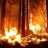 В пострадавшей от наводнения Иркутской области введён режим ЧС из-за лесных пожаров