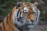 Родители девочки, покусанной тигром в зоопарке Барнаула, подали заявление в суд