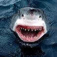 Двое американских подростков лишились рук при нападении акул