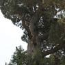Ученые научились ускорять рост деревьев