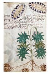 Самый загадочный манускрипт в мире выложен в открытый доступ