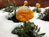 Синоптики рассказали о резкой перемене погоды в Москве