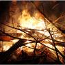"""Огонь охватил более ста гектаров в """"Чернобыльской пуще"""""""