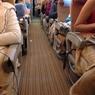 «Икар» заставил пасажиров ждать 15 часов вылет  из Шарм-эль-Шейха