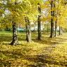 В Москве в понедельник будет тепло и дождливо