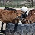 На Кубани сотни  фермеров выступили за продление антироссийских санкций