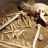 Неподалеку от МКАДа обнаружены два скелета