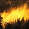 Площадь пожара в Астраханском заповеднике сократилась до 50 га