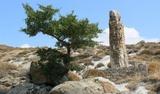 Парк окаменевших деревьев планируют взять под охрану ЮНЕСКО