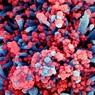 Обнаружен новый фактор смертности при коронавирусе