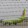 """""""S7 Airlines""""распродает билеты по ценам, сниженным в 5 раз"""