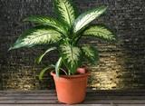 Флорист назвала самые опасные комнатные растения