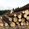 Матвиенко предложила приостановить экспорт леса на время проверки в отрасли