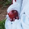 Генпрокуратура России ошеломлена урожаем грибов и яблок в Белоруссии