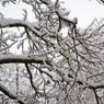 Между Грузией и Россией выпал снег