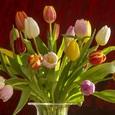 Мимоза, тюльпан и гвоздика: советские цветы женского праздника