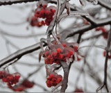 Последняя неделя ноября станет по-настоящему зимней