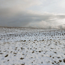 Омск засыпало черным снегом