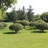 Как правильно сажать деревья - советы агронома