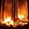 На греческом острове началась эвакуация жителей из-за сильного лесного пожара