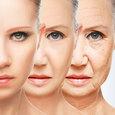 Американские ученые рассчитывают победить старость с помощью регуляции белка