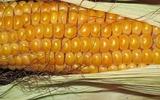 Анкара ужесточила правила импорта сельхозпродукции из РФ