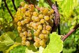 Медики рассказали о пользе экстракта виноградных косточек при борьбе с гипертонией